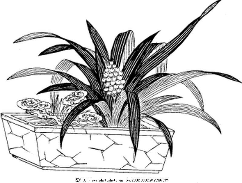 素描高清植物抽象素材