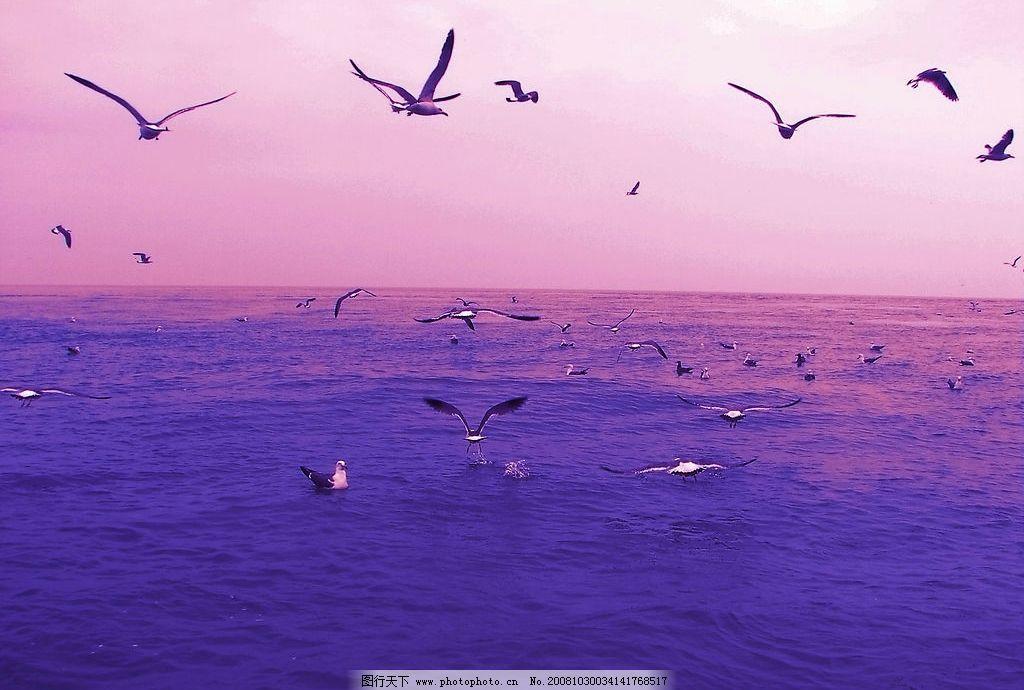 自然风光 天空 海水 大海 海鸥 云彩 旅游摄影 摄影图库