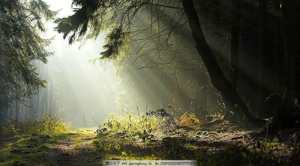 清晨阳光 森林 国外旅游 风景 摄影图库