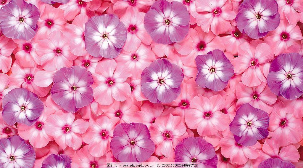花底纹背景 鲜花 花纹 边框 鲜艳 漂亮 经典 植物 自然