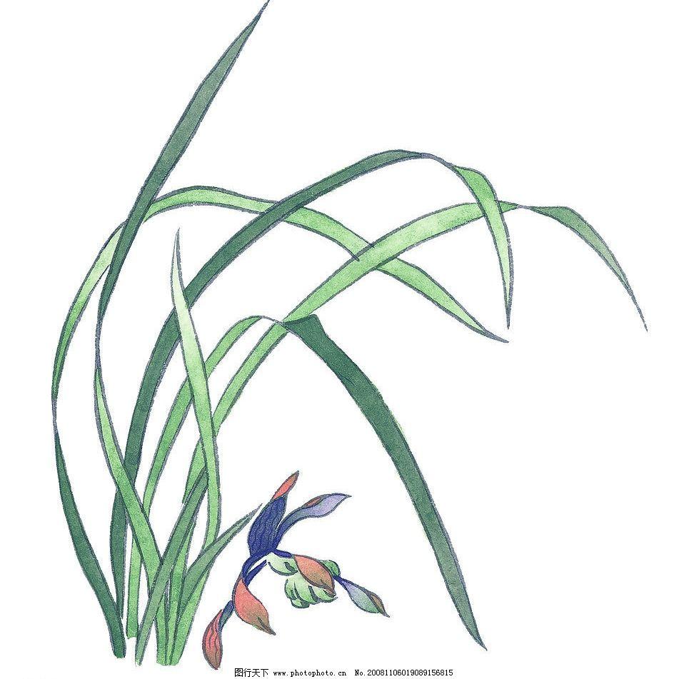 兰草 国画 艺术 植物 兰花 文化艺术 绘画书法 设计图库 72dpi jpg