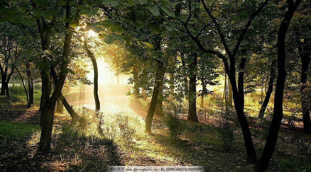 阳光树林 阳光 树林 森林 树 大树 太阳 太阳光 自然 风景 摄影 景观