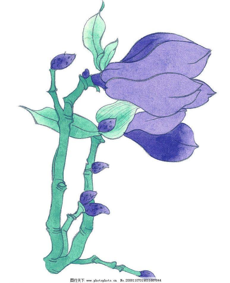 玉兰 玉兰花 植物 国画 花 艺术 文化艺术 绘画书法 设计图库 72dpi j