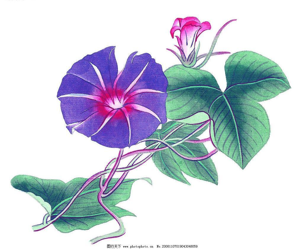 喇叭花 花卉 国画 艺术 植物 文化艺术 绘画书法 设计图库 72dpi jpg