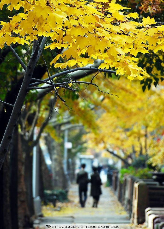 金秋 秋天 小路 黄叶 背影 漫步 自然景观 自然风景 摄影图库 300dpi