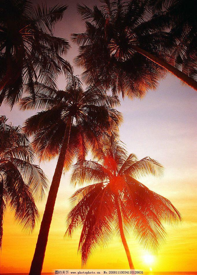 沙滩夕阳 沙滩 夕阳 椰子树 自然风景 美丽 漂亮 旅游摄影 摄影图库
