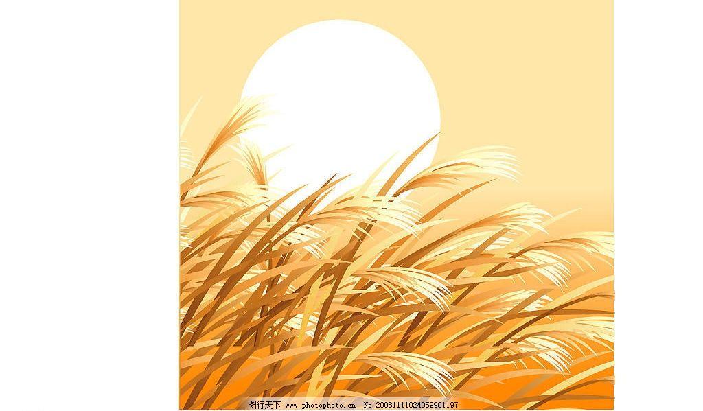 金色麦穗矢量素材图片
