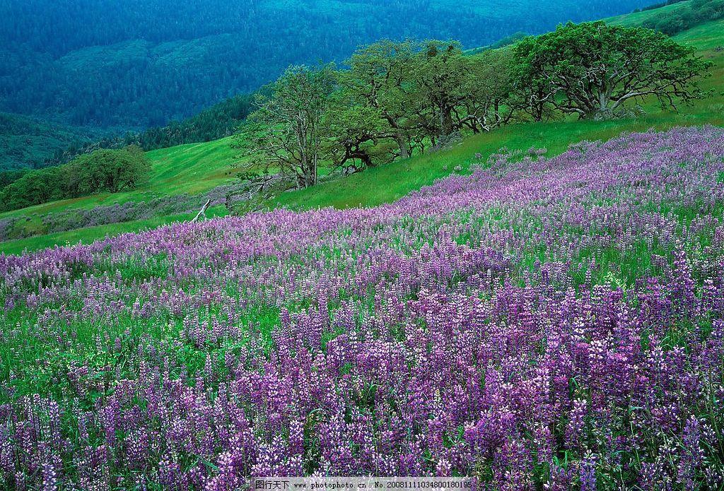 山坡野花 山坡 野花 自然景观 自然风景 摄影图库 72dpi jpg