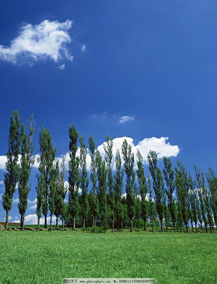 绿地蓝天白云飘 绿色 土地 蓝天 白云 树木 自然 风光 自然景观 自然