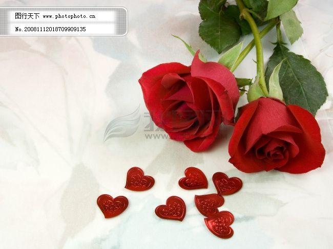玫瑰花免费下载 玫瑰花 玫瑰花 图片素材 卡通|动漫|可爱图片
