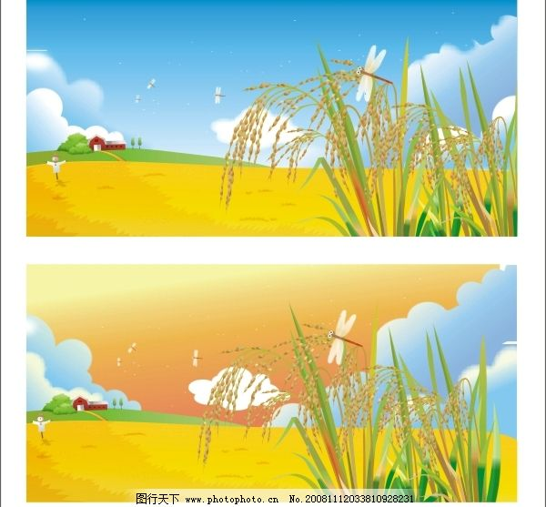 矢量稻田图片