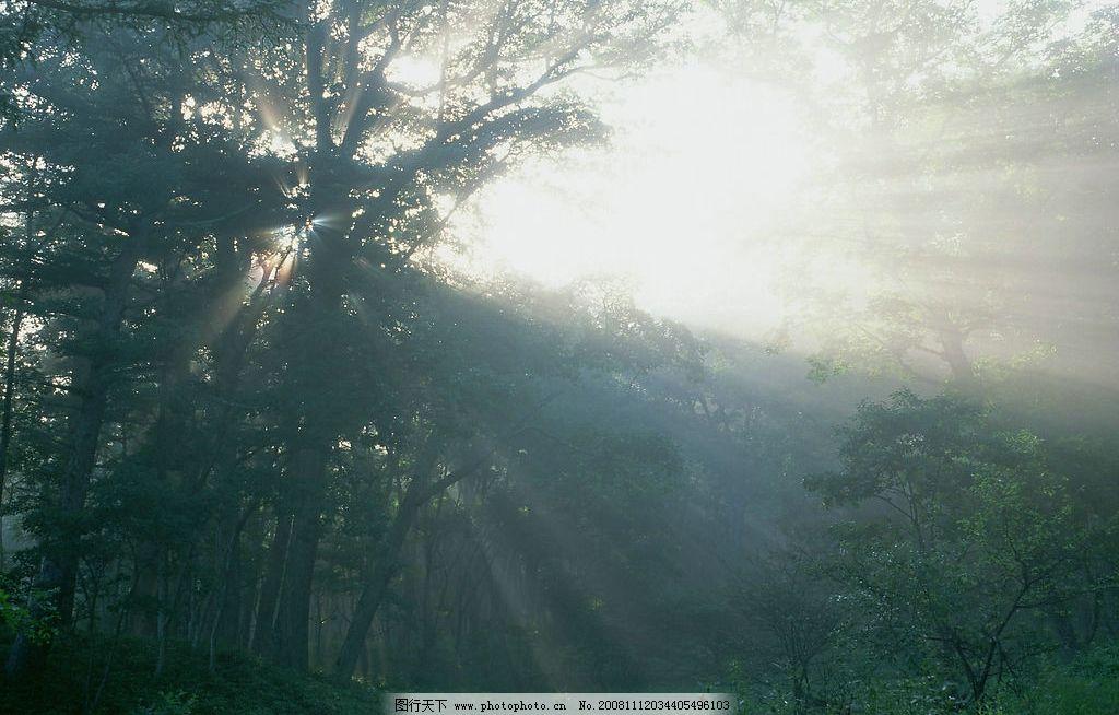 阳光树林 树木 树林 森林 野草 阳光 光线 自然景观 山水风景 摄影