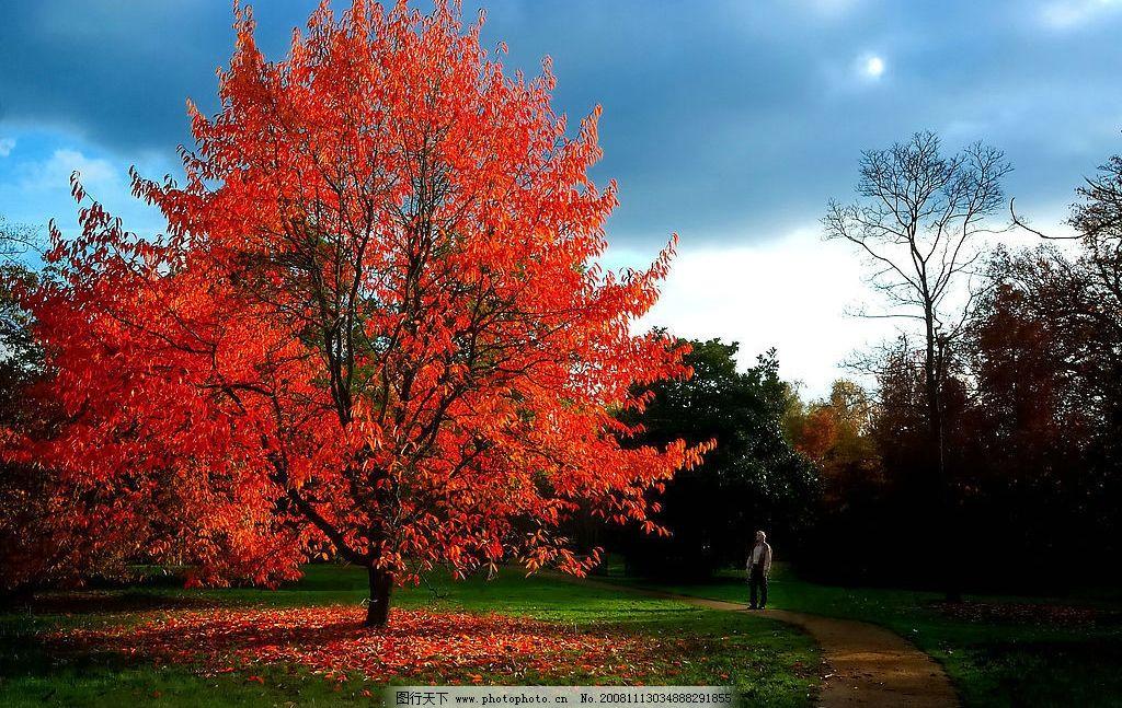 红叶 树林 秋天 公园 小路 草地 落叶 天空 白云 自然景观