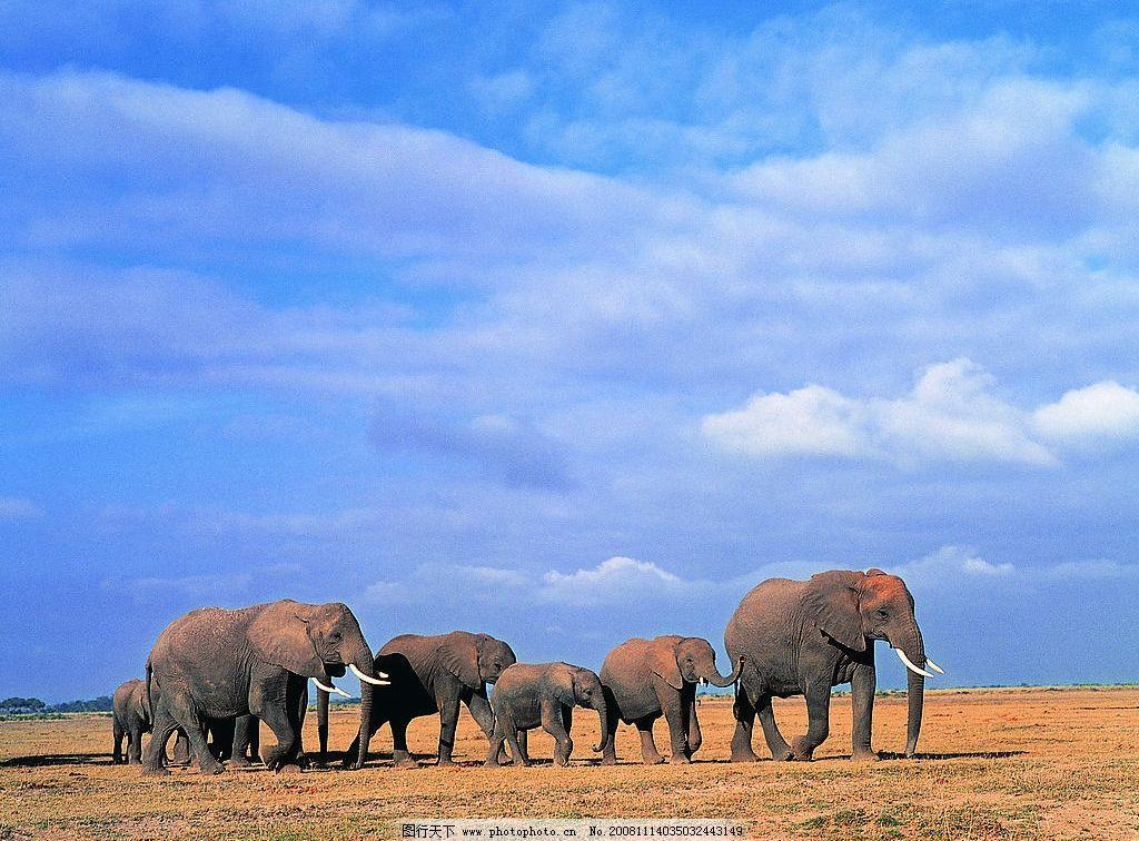 大象 蓝天 象群 生物世界 野生动物 摄影图库