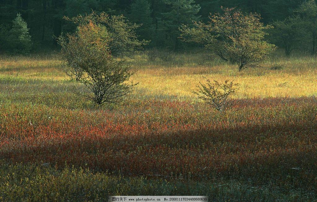 剪影 树木 树林 森林 原始森林 野外 野草 野花 自然景观 山水风景