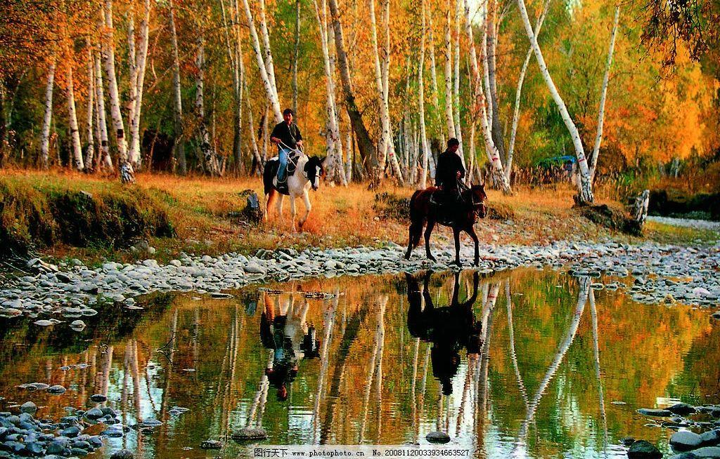 新疆图片 白桦林 马 骑马 小溪 森林 秋天 美景 优美 旅游摄影 国内旅