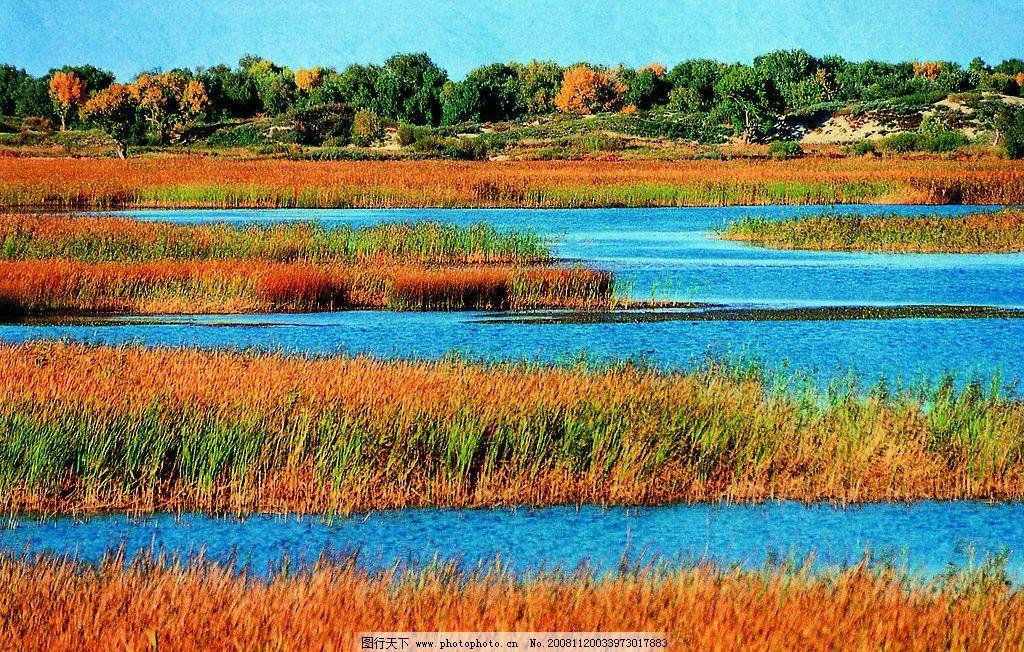 新疆 胡杨 草滩 美景 景色 优美 旅游摄影 国内旅游 摄影图库