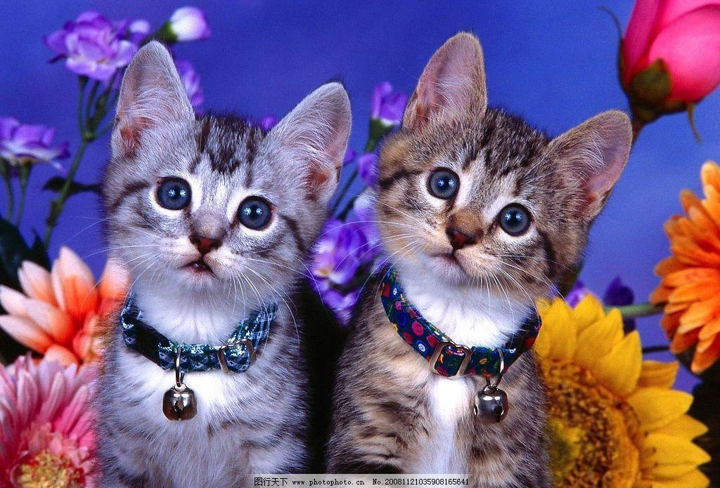 小猫 猫 动物 生物世界 其他生物 摄影图库 72dpi jpg