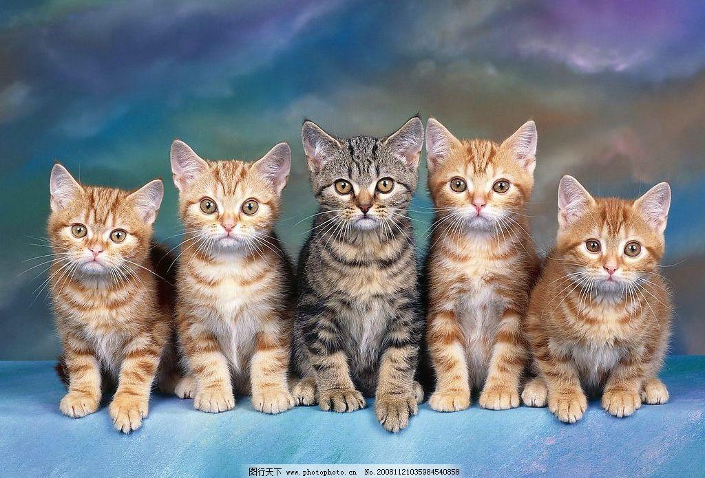 5只并排小猫 猫 动物 宠物 生物世界 其他生物 摄影图库 72dpi jpg
