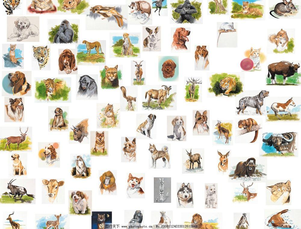 文化艺术美洲画风动物集锦图片,各种动物 源文件库-图