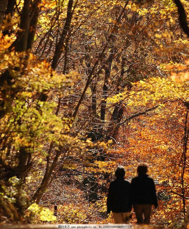 秋天 深秋 落叶 郊外 户外 郊区 散步 自然景观 其他 摄影图库图片