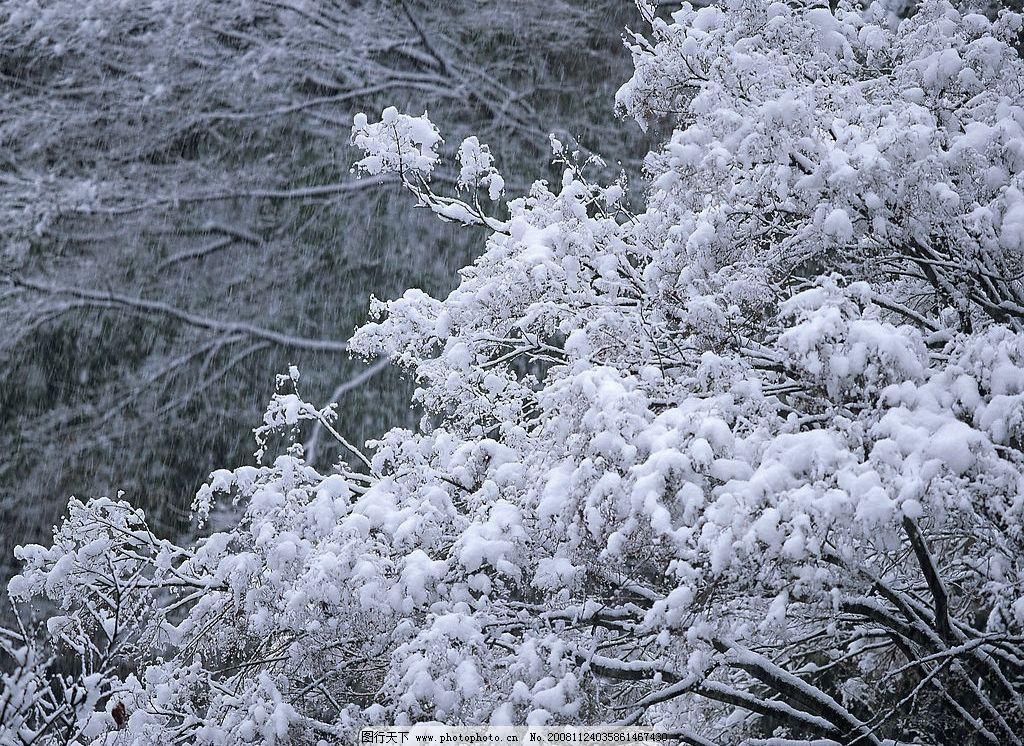 雪景 雪 雪中树林 树林 自然景观 自然风景 摄影图库 350dpi jpg