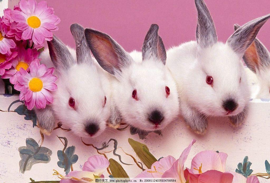 壁纸 动物 猫 猫咪 兔子 小猫 桌面 1024_695