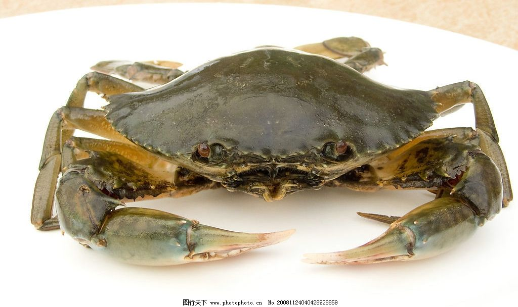 螃蟹 海鲜 蟹类 摄影图库