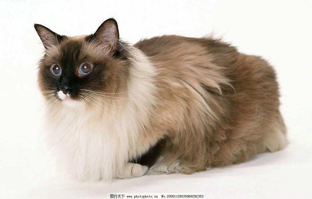 漂亮的猫咪图片