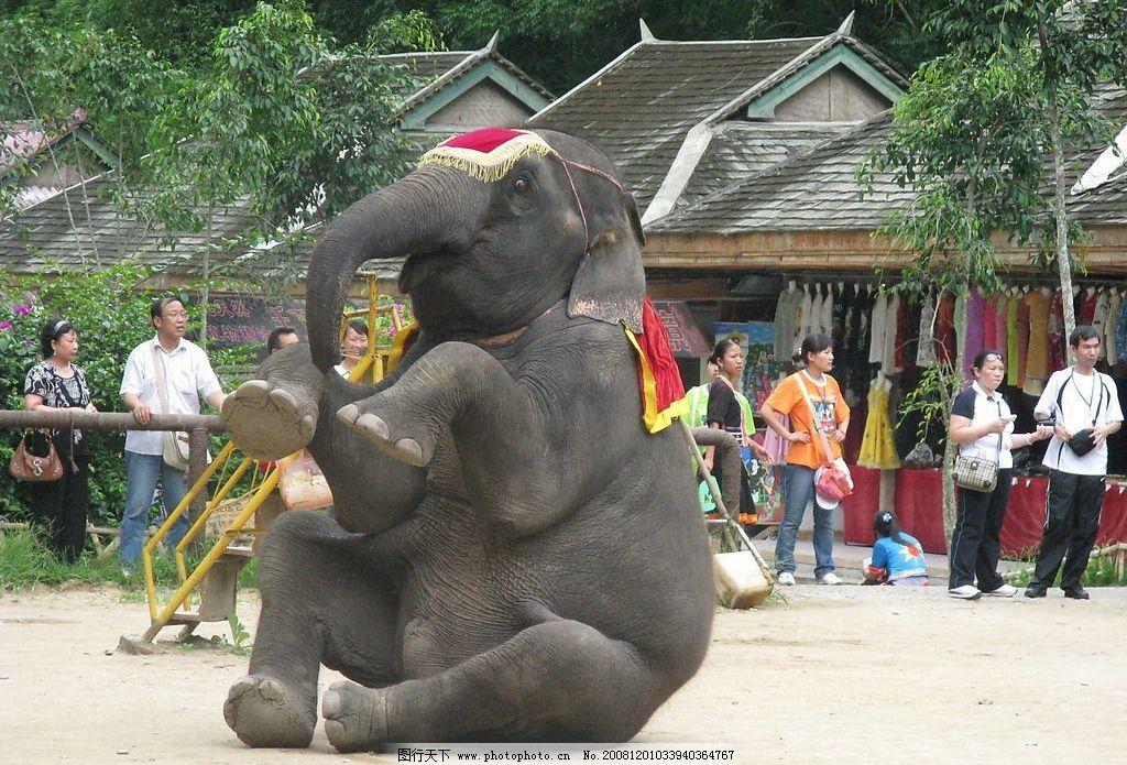 西双版纳大象表演图片