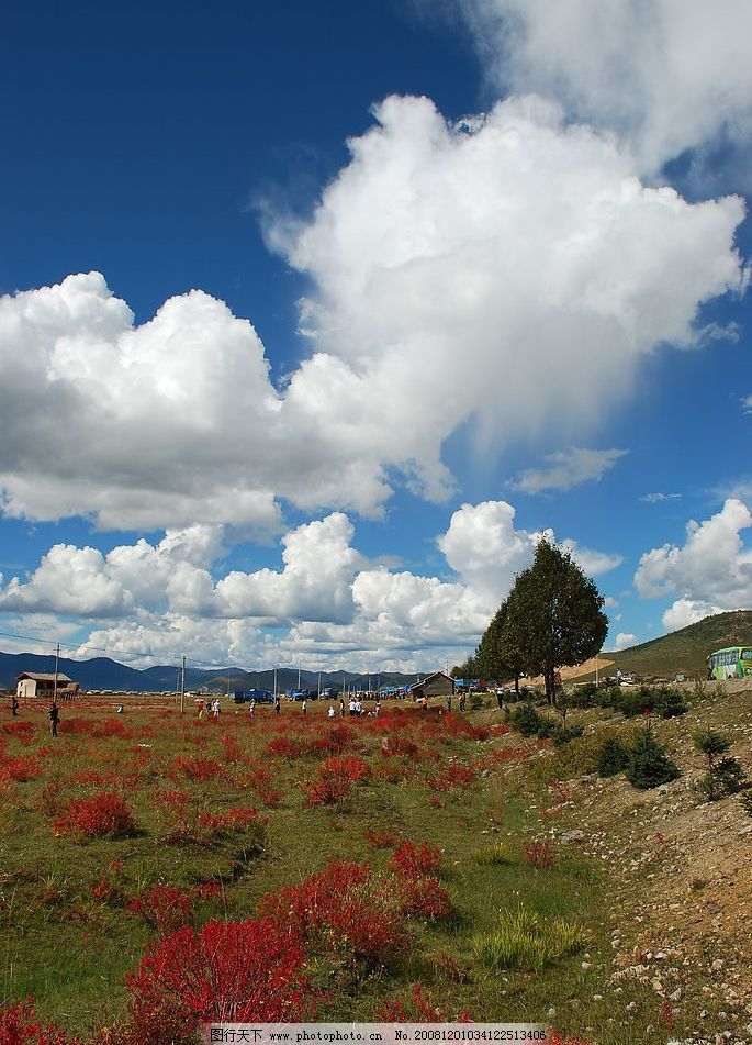 风景 野外风景 自然 清新 天空 蓝天 白云 红花绿草 房屋 树