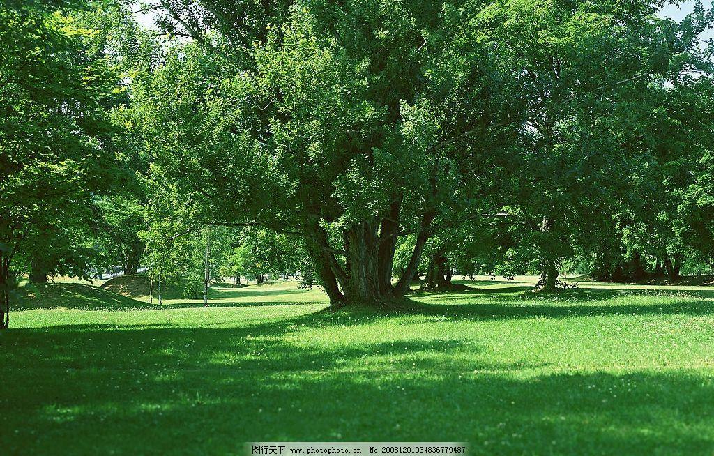 草地树木 自然风景 自然景观 绿树 树林 树阴 摄影图库 高精度图片