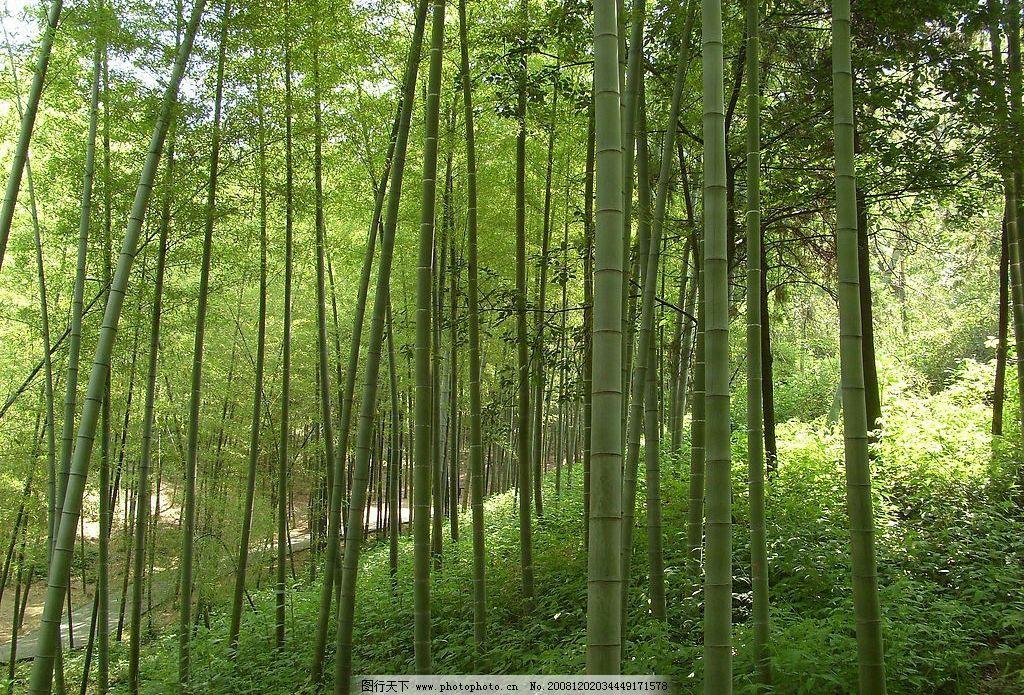 竹子 深山 竹林 翠绿 自然景观 山水风景 摄影图库 96dpi jpg