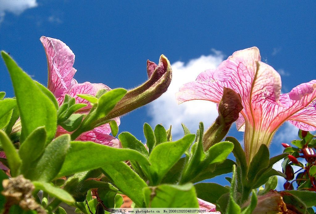 热带植物 多彩的花朵 花海 摄影花卉 花卉特写 生物世界 花草 自然