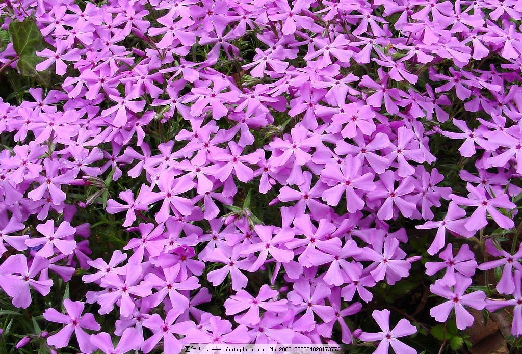 花卉植物图片_自然风景