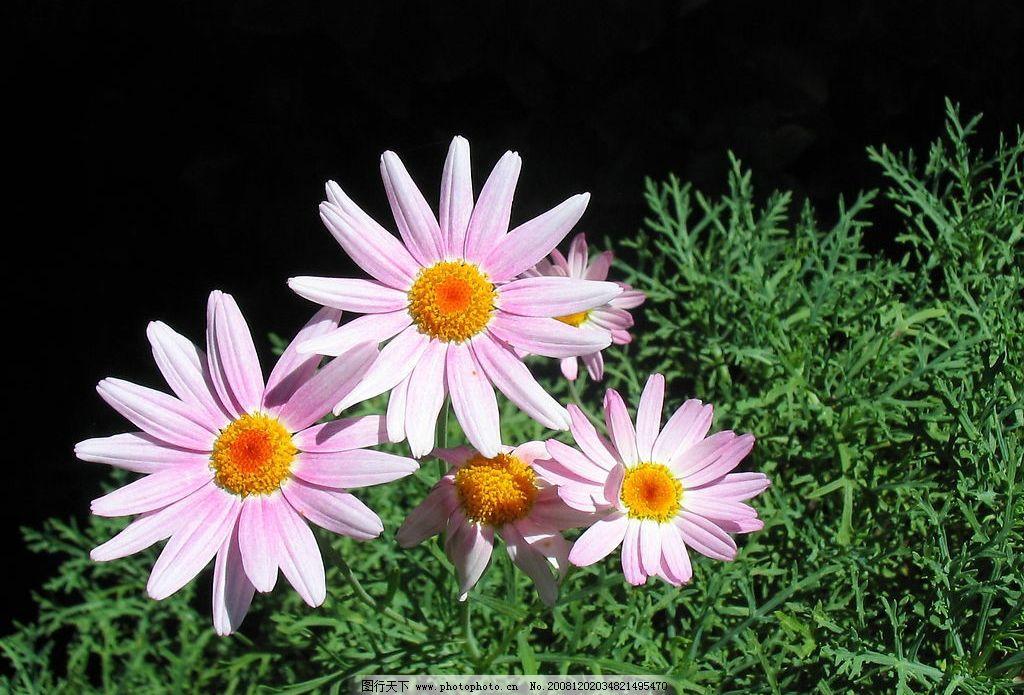 花卉植物图片