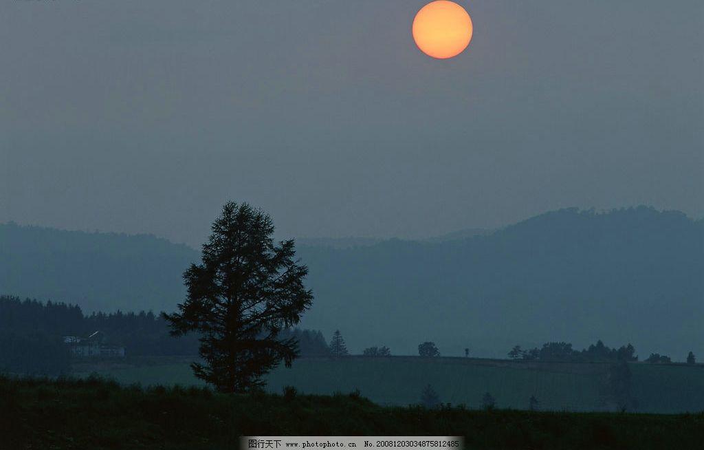 夜晚树林图片 自然风景 自然风光 自我景观 夜晚树林景观 自然景观