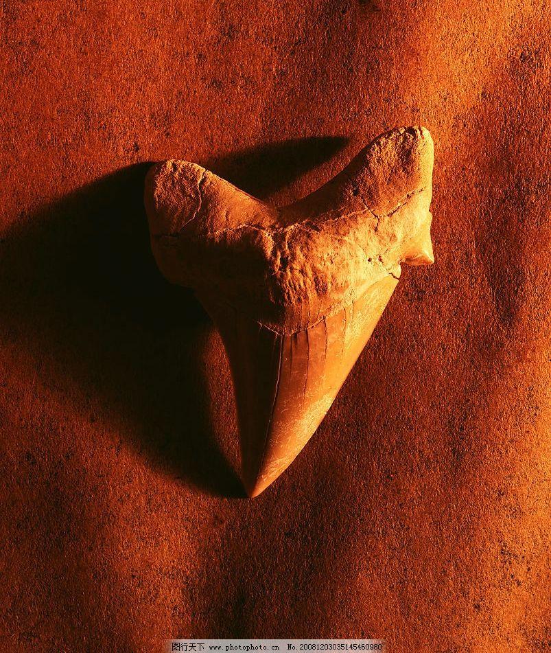 生物标本 化石 海洋生物标本 光线 照片 特殊照片 古生物标本