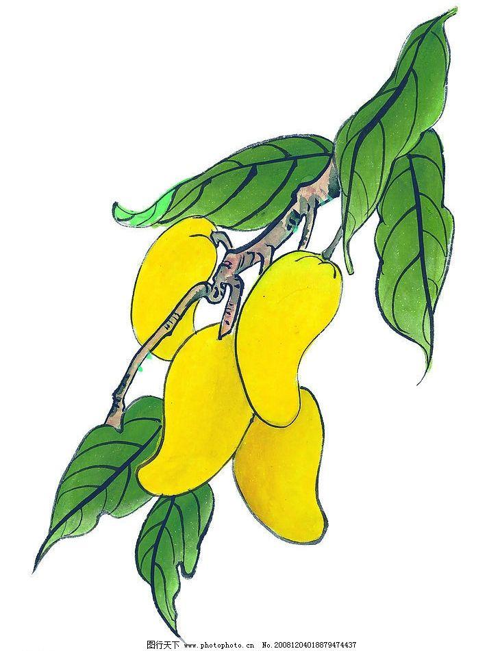 芒果 植物 果蔬 果树 国画 艺术 文化艺术 传统文化 设计图库 72dpi