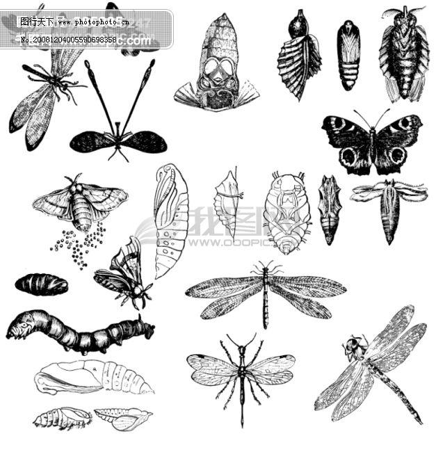 昆虫类欧美古典线条矢量素材