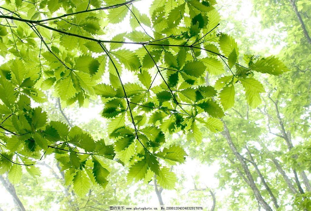 阳光下的叶子 树叶 自然景观 自然风景 摄影图库 72dpi jpg