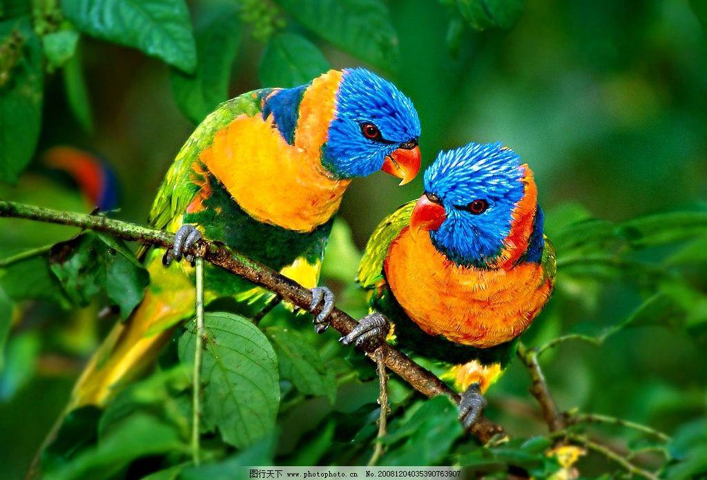 壁纸 动物 鸟 鹦鹉 1024_695
