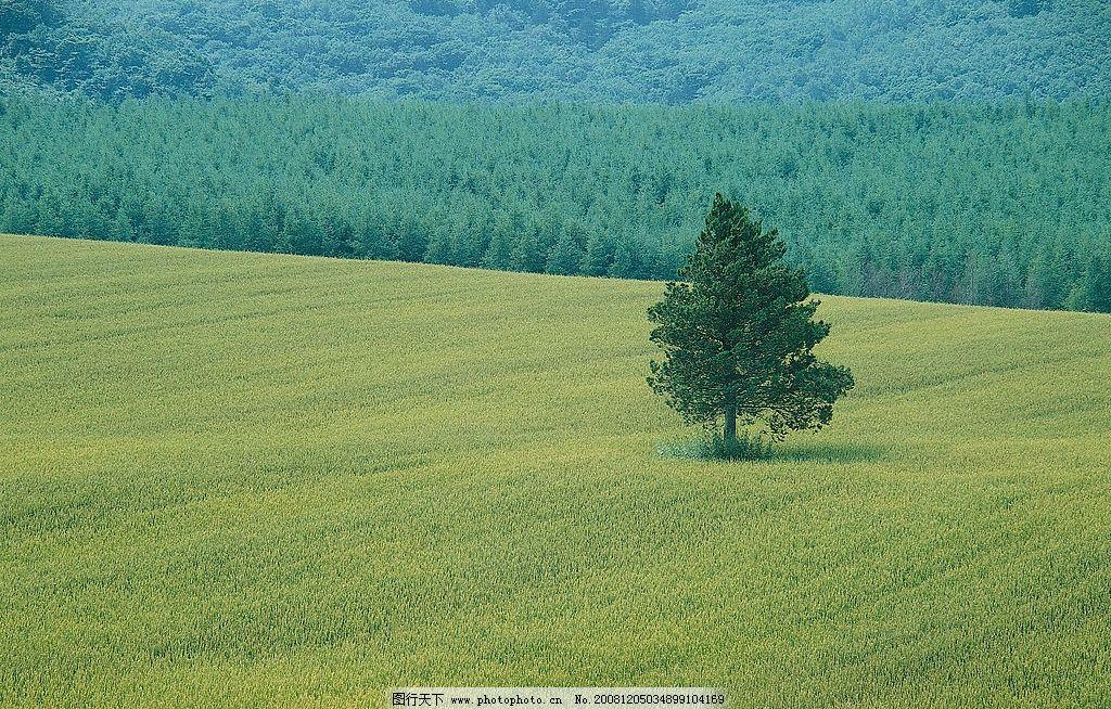 自然风光 中国自然风景 绿色 草地 小树 绿树 树木 大片的草地