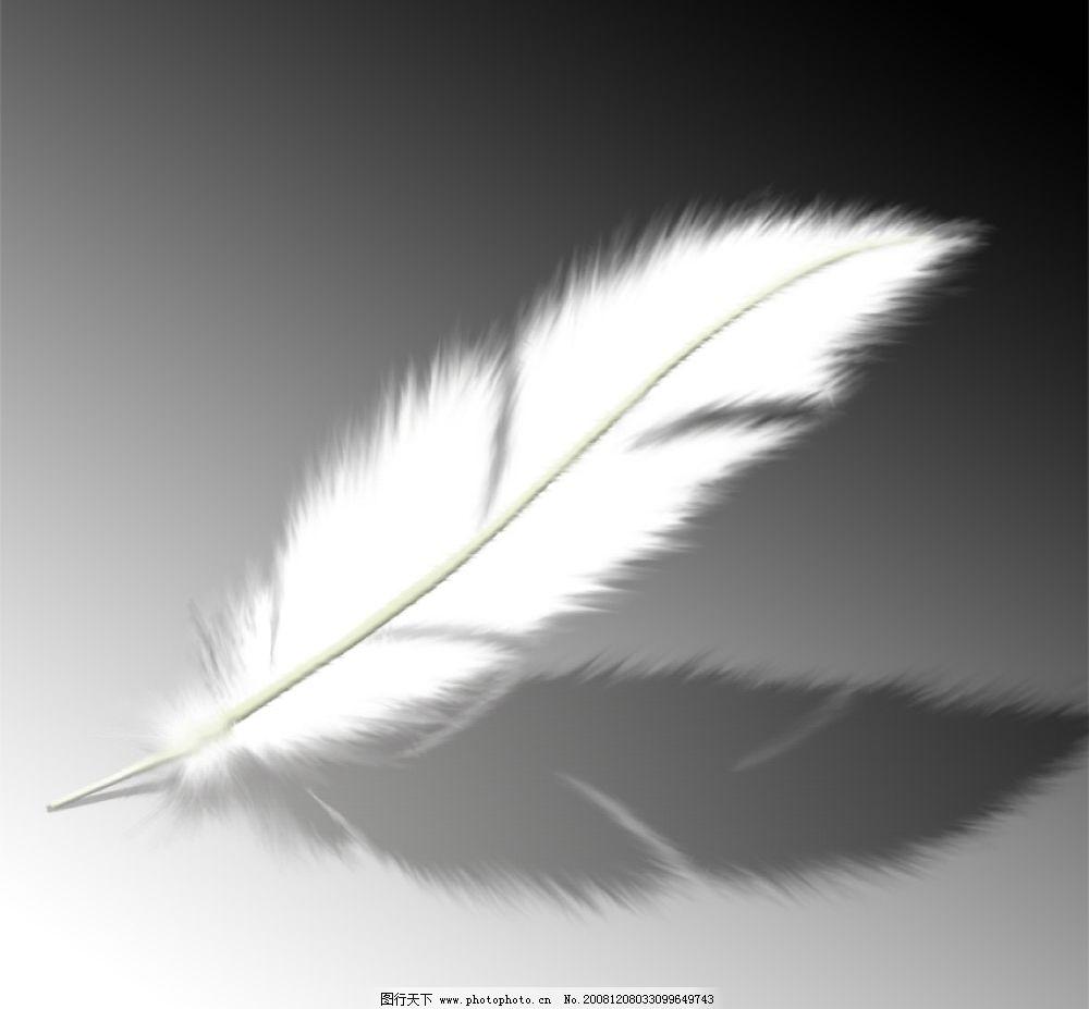 羽毛 细致的羽毛 psd分层素材 源文件库 72dpi psd