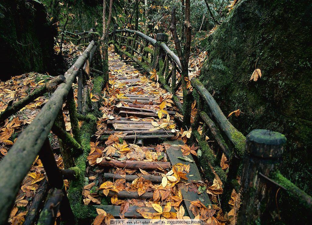 小桥落叶 树林 木桥 黄叶 山石 高清 风景 摄影图库