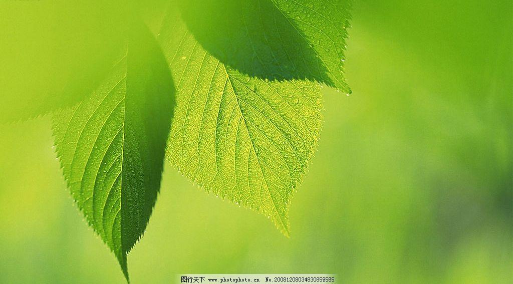 养眼 绿色 壁纸 自然景观 自然风景 摄影图库 72dpi jpg 【养眼绿色