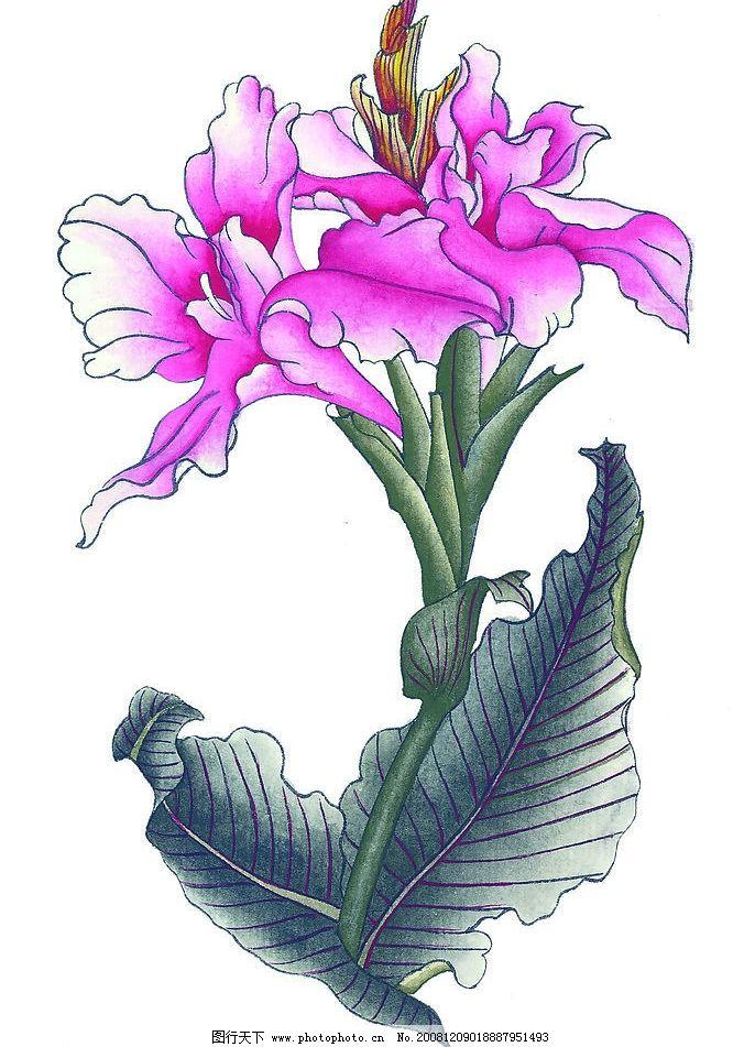 美人蕉2 花朵 植物 花卉 国画 艺术