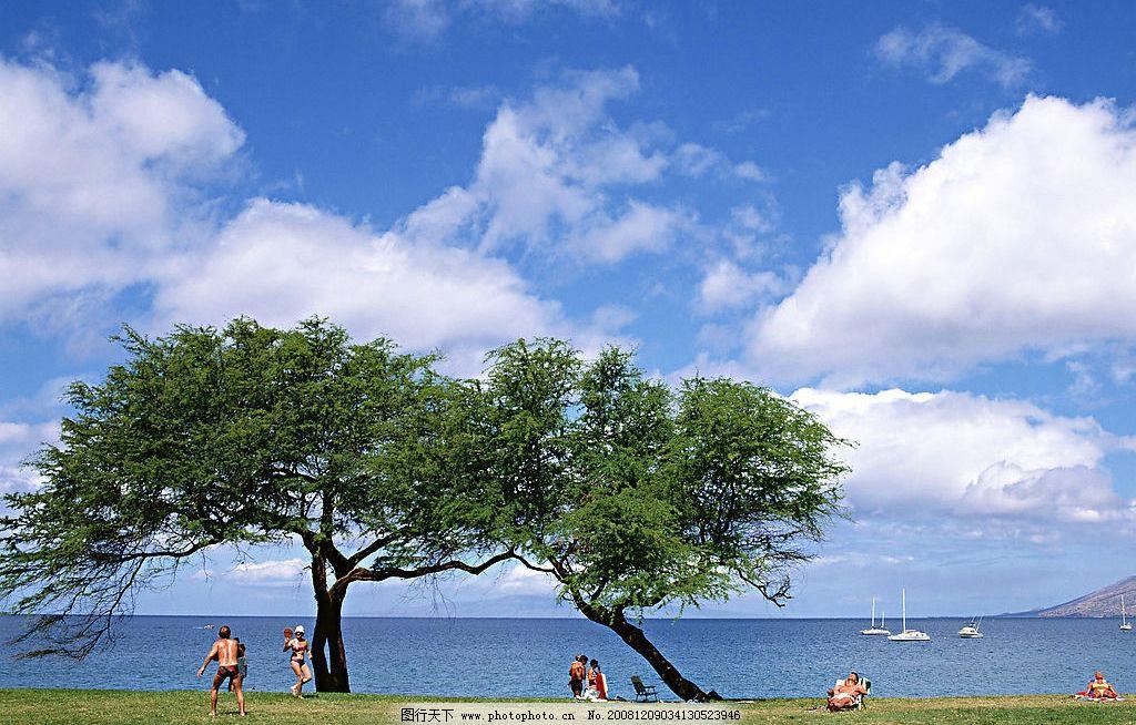 海边美景 树下 风和日丽 旅游摄影 自然风景 摄影图库