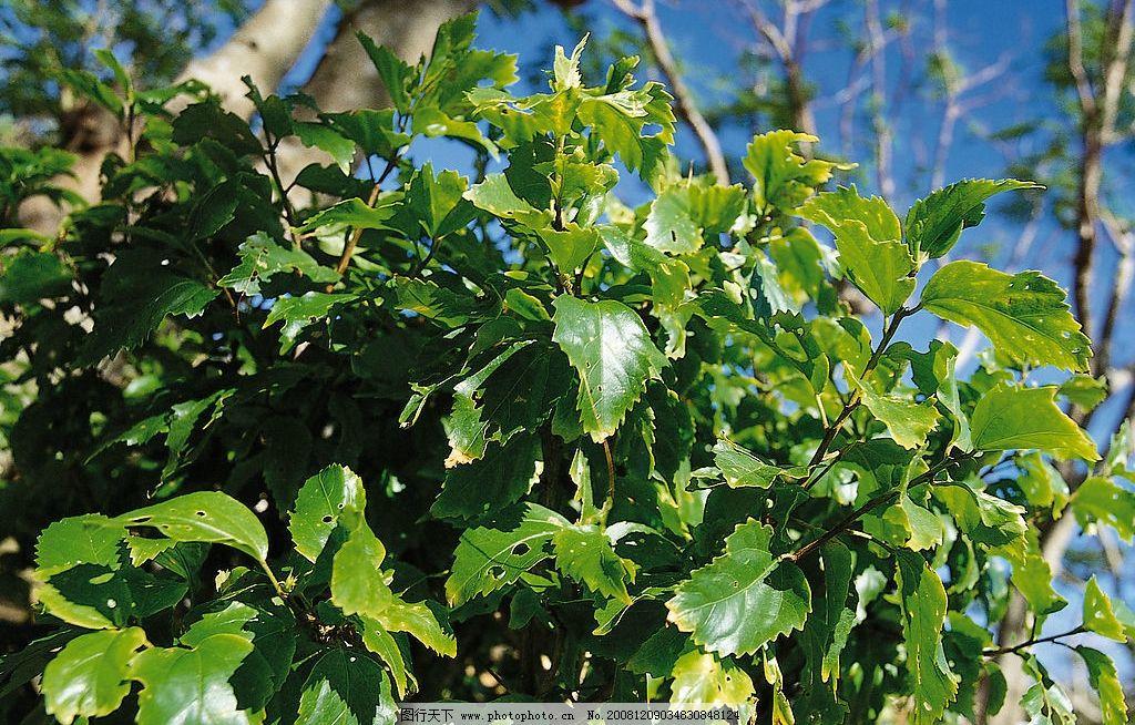 树木特写图片 树木 特写 自然风光 自然景观 树木景观 树叶 树枝 树干