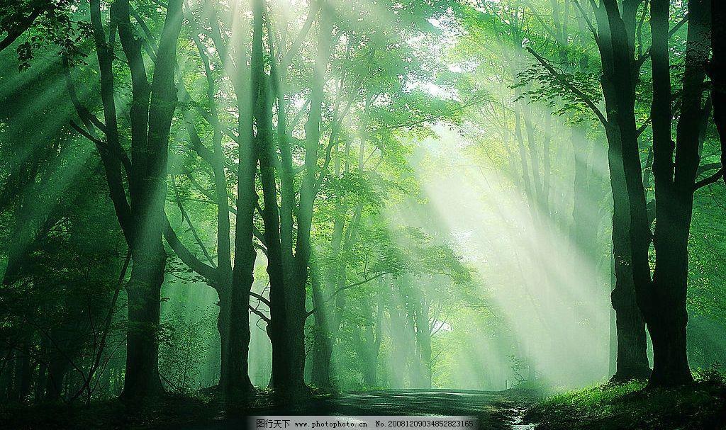 森林 阳光 树林 自然景观 自然风景 摄影图库 72dpi jpg